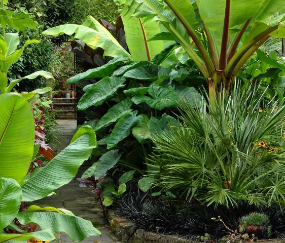 Formal tropical garden ideas photograph cottage garden for for Low maintenance tropical landscaping